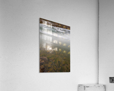 Morning Sun ap 2934  Acrylic Print