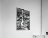 Silver Cascade Falls ap 2226 B&W  Acrylic Print