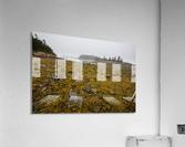 Low Tide ap 2271  Acrylic Print