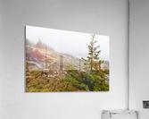 Lone Pine ap 2284  Acrylic Print