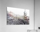 Lone Pine ap 2284 B&W  Acrylic Print