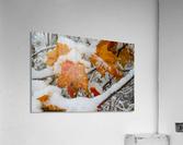 Early Snow ap 1571  Acrylic Print