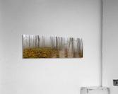 Mystic Forest apmi 1620  Acrylic Print
