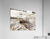 Little snail in the village of Portugal  Acrylic Print