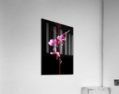 Love Flower  Acrylic Print