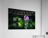 Royal Flower  Acrylic Print