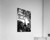 Metal Leaves   Impression acrylique