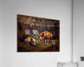 Wild Boars  Acrylic Print