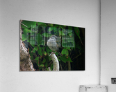opportuniste    plumes  Acrylic Print