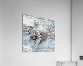 Silver Gray Seashell On Ocean Shore Waves And Rocks I  Acrylic Print