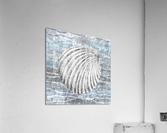 Silver Gray Seashell On Ocean Shore Waves And Rocks II  Acrylic Print