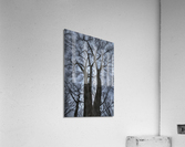 Feux d artifice  Acrylic Print