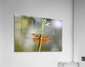 PEEK-A-BOO  Collection 1-4  Acrylic Print