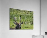 D8061889 B94D 4585 85A6 654F34B6CEB0  Acrylic Print