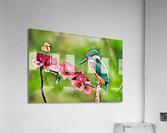 A Spring Friendship  Acrylic Print