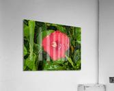 Rain & Nature  Acrylic Print