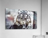 Fierce   Acrylic Print