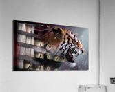 Lunging Tiger  Acrylic Print