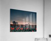 Tractors & Tulips  Acrylic Print