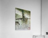 Windmills in the fog  Acrylic Print