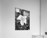 BlackPinkLove  Acrylic Print