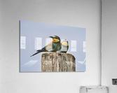 European Bee-Eaters  Acrylic Print