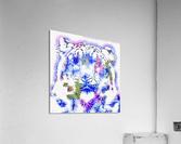 Spirit of the Snow Leopard   Acrylic Print