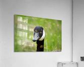 Toothpick Goose  Acrylic Print