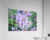 0056  Acrylic Print