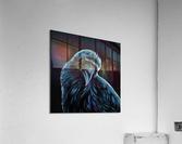 Curious Raven  Acrylic Print