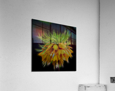 Crown Imperial  Acrylic Print