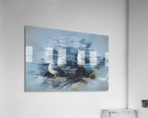 Preening Gulls  Acrylic Print