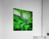 Just Ferns  Acrylic Print