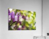 Confettis de Lady Suzanne  Impression acrylique