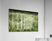 Confettis au jardin 1  Acrylic Print