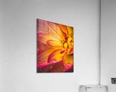 Rain On The Flowers  Acrylic Print