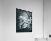 Flowerful Study In A Monochromatic Vibe  Acrylic Print
