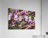 IMG 7694  Acrylic Print
