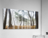 In The Misty Pine Forest  Acrylic Print