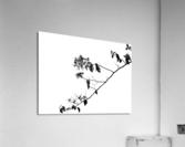 Tree Branch II  Acrylic Print