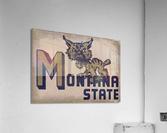 Vintage Montana State Bobcat Art  Acrylic Print