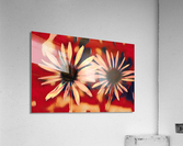 Two Coneflowers  Acrylic Print