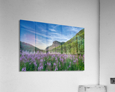Fireweed at La Grand Falaise  Acrylic Print