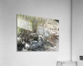 Sheep Huddle  Acrylic Print