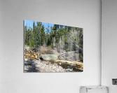 Upper Provo River  Acrylic Print