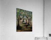 Oak trees  Acrylic Print