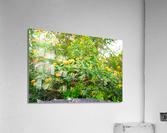 Wild Flowers Waimea Canyon Kauai  Acrylic Print