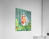 Bird Painting Robin  Acrylic Print