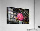 The Color Of Life  Acrylic Print