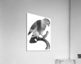 Macaw - Birds - Paradise - Tropical- Art Print - Wall Art - Parrot  Acrylic Print